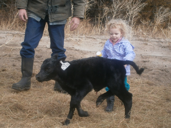 ReeRee is ready to pet the calf- the calf has other ideas