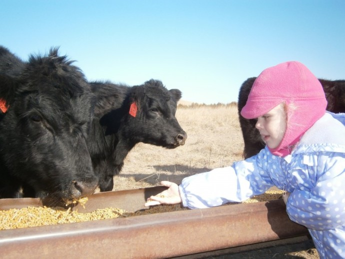 Makes me remember warmer days!  When ReeRee almost had the bulls tame enough to eat from her hand.