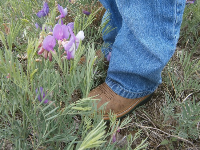 Cowboy Boots and Showy Peavines