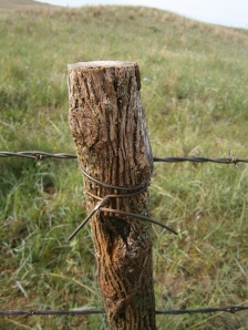 Hedge posts are superhard, so you can't drive a staple (or nail) into them to hold the wire on.  Instead Newt wraps wire around the post and barbed wire to hold the barbed wire in place.