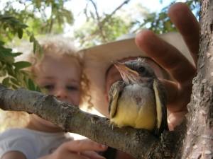 Petting fallen bird