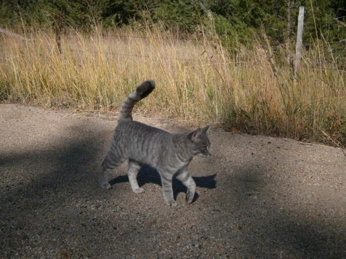 Hissy Kitty