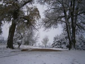Snow mailbox
