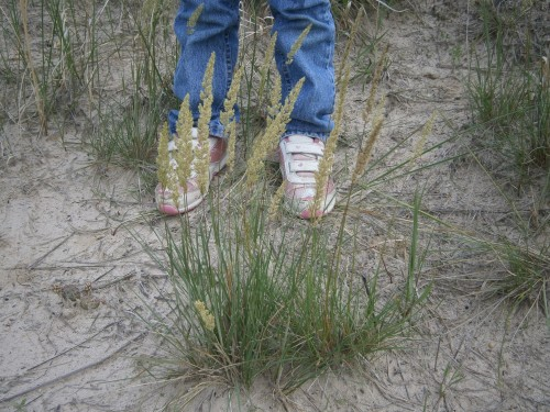 Size reference P Junegrass